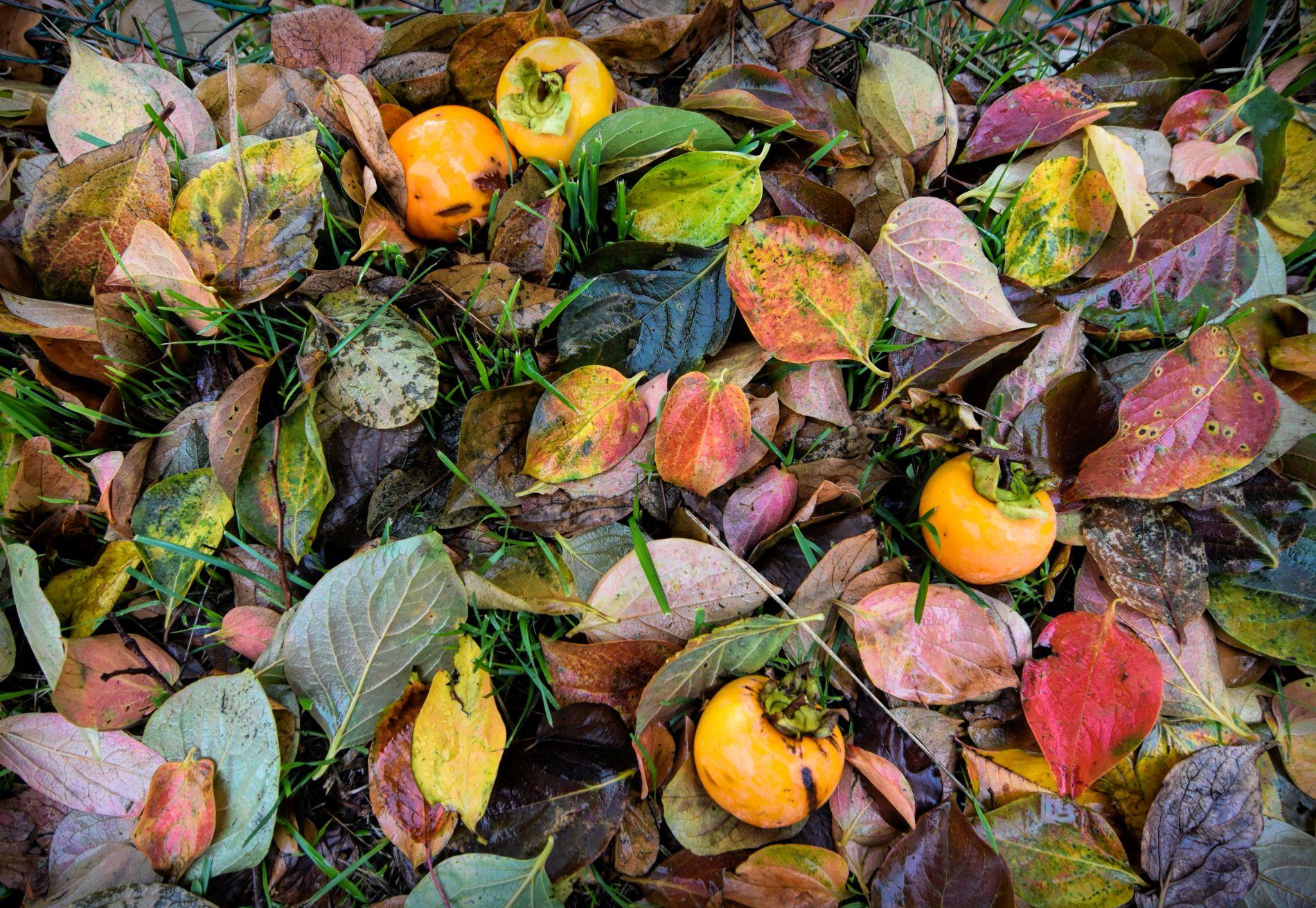 Autumn in Lunigiana